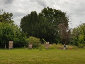 Howbery's bee hives with Robin